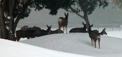 A herd of about 17 deer is seen frequently near Stratton House Inn.
